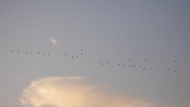 Screen Shot 2013-12-04 at 7.17.42 AM