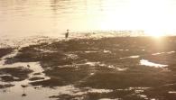 Screen Shot 2013-12-07 at 7.46.46 AM